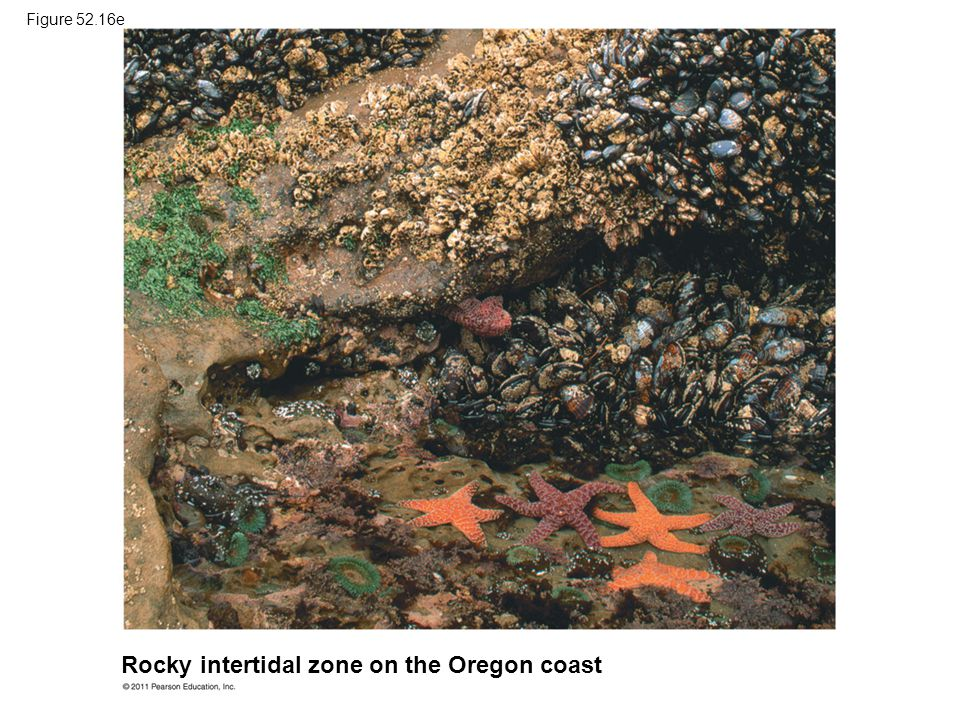 Rocky intertidal zone on the Oregon coast