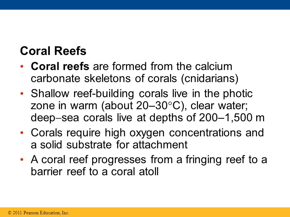 Coral Reefs Coral reefs are formed from the calcium carbonate skeletons of corals (cnidarians)