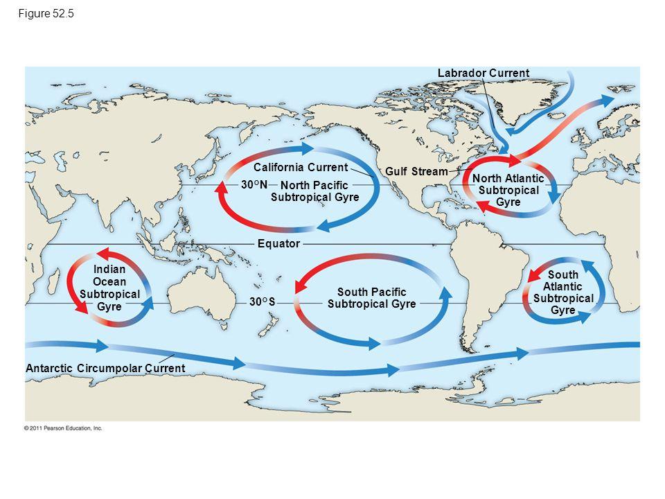 Figure 52.5 Labrador Current. California Current. Gulf Stream. North Atlantic. Subtropical. Gyre.