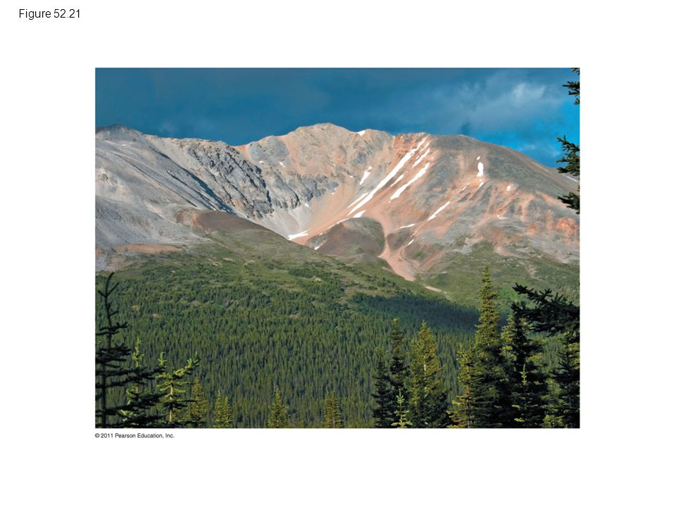 Figure 52.21 Figure 52.21 Alpine tree line in Banff National Park, Canada.