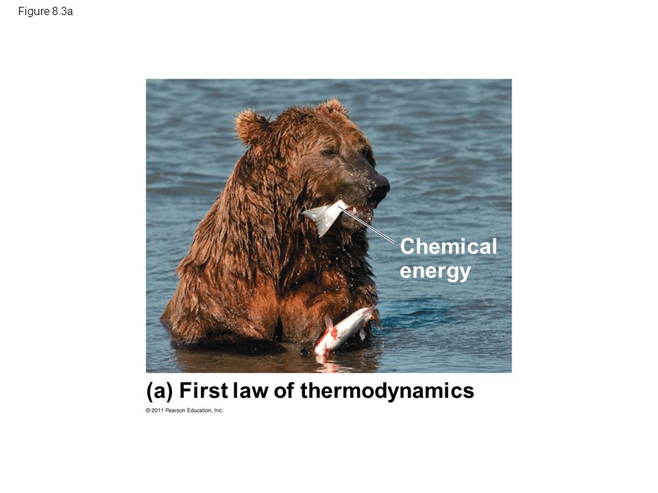 (a) First law of thermodynamics