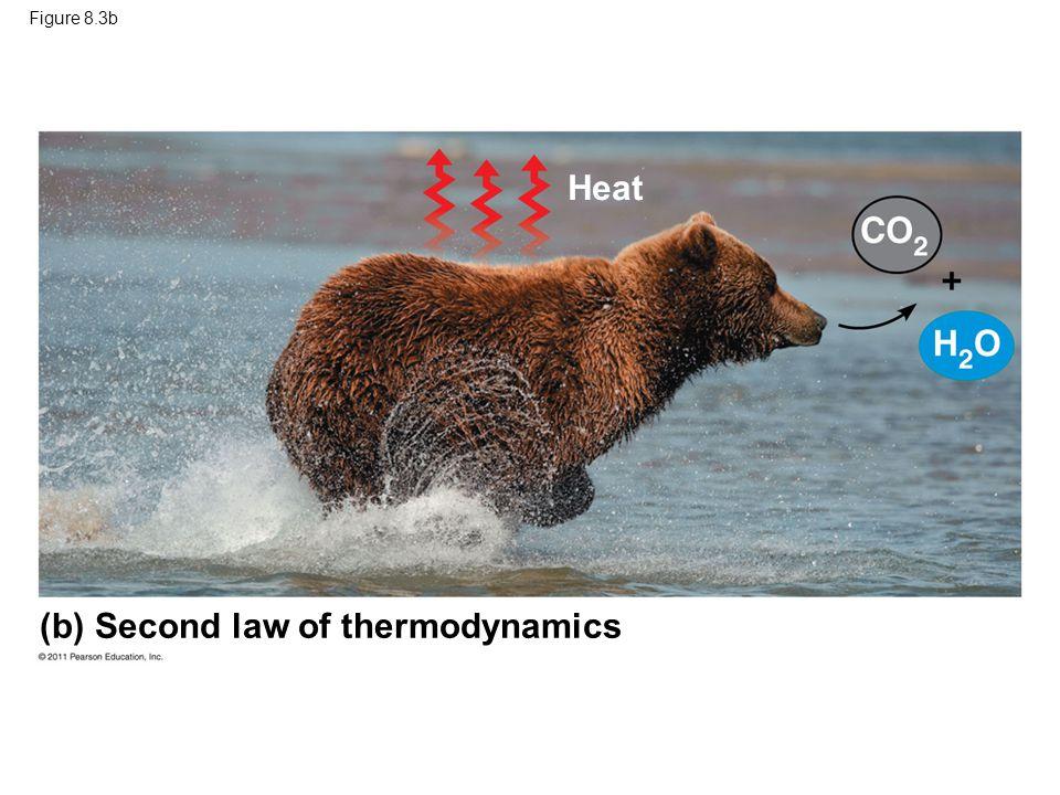 (b) Second law of thermodynamics