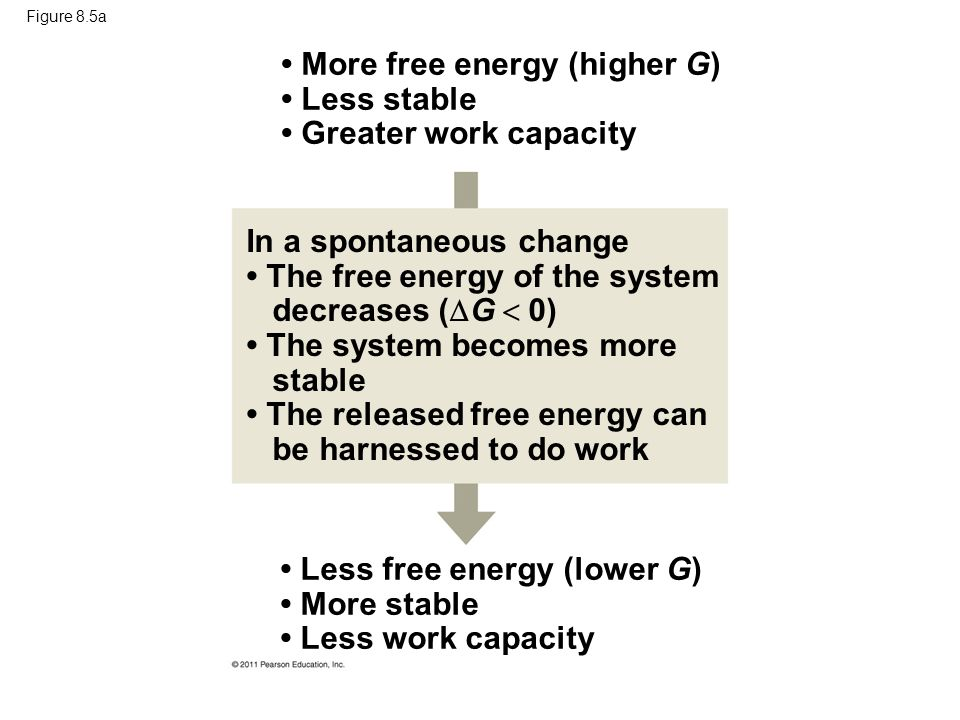• More free energy (higher G) • Less stable • Greater work capacity