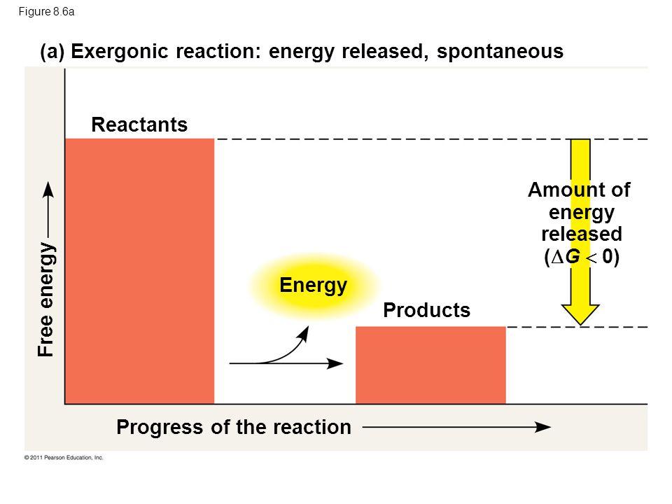 Amount of energy released (G  0)