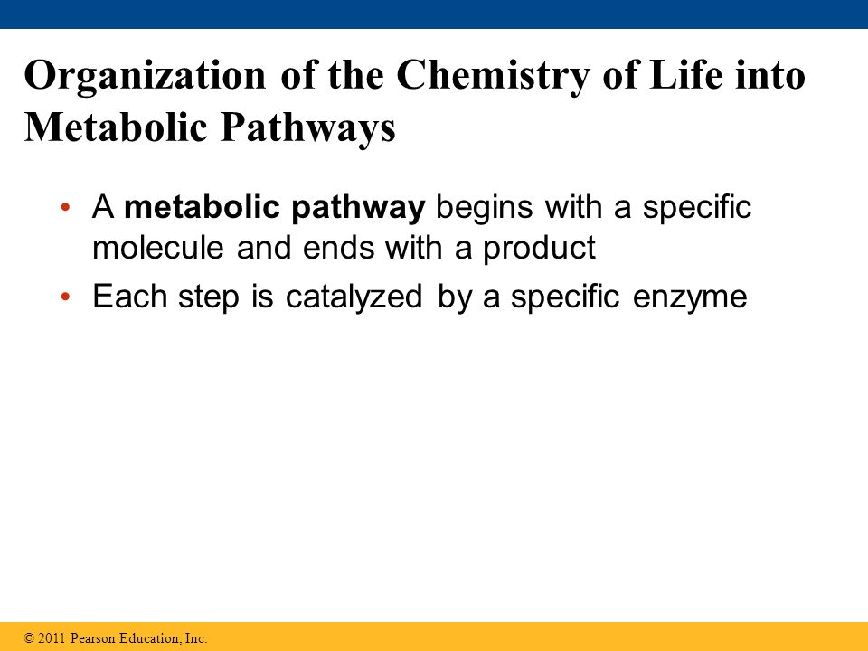 Organization of the Chemistry of Life into Metabolic Pathways