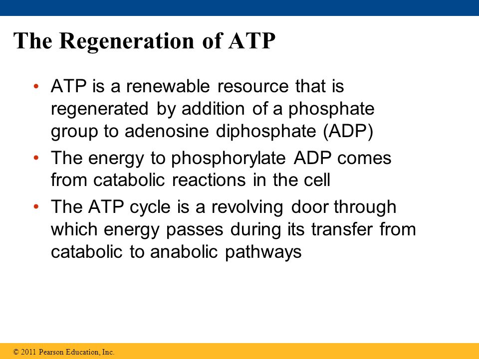 The Regeneration of ATP