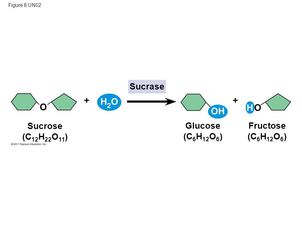 Sucrose (C12H22O11) Glucose (C6H12O6) Fructose (C6H12O6)