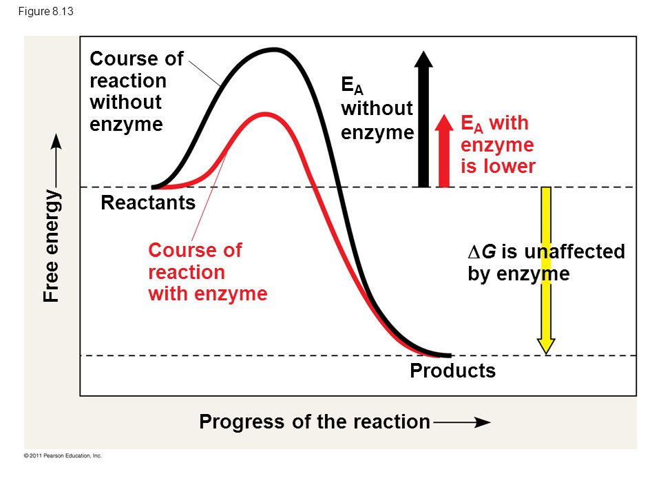 Course of reaction without enzyme EA without enzyme