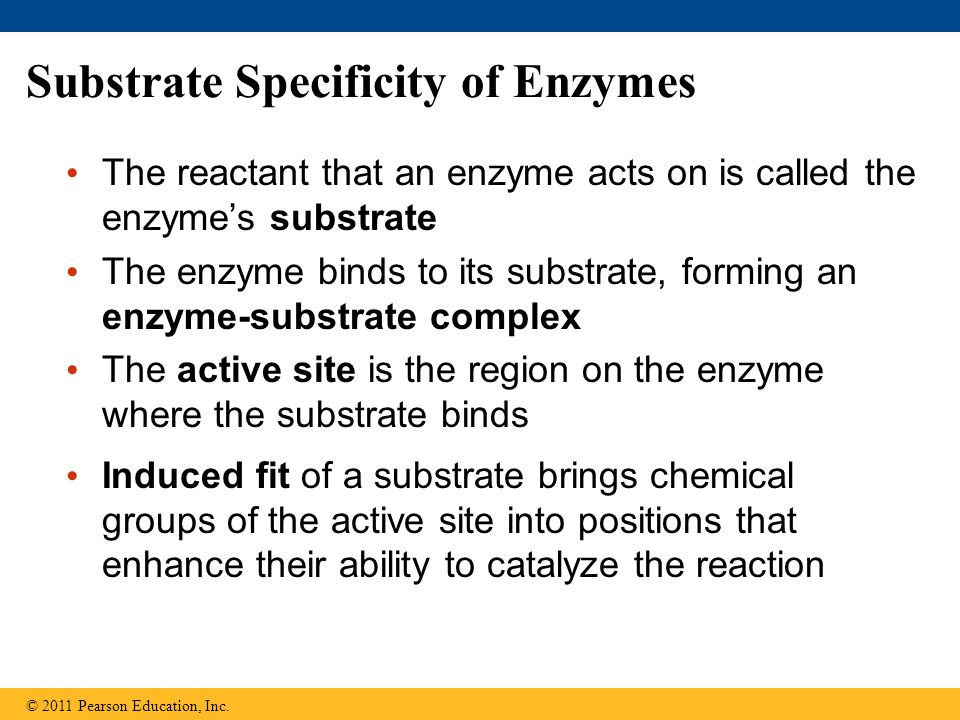 Substrate Specificity of Enzymes