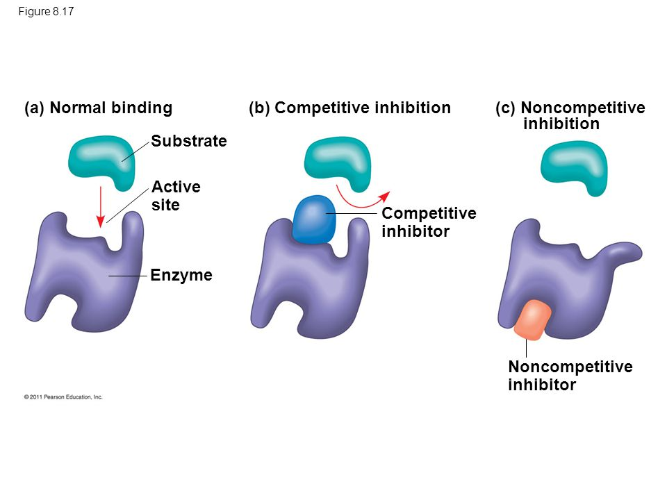 (b) Competitive inhibition (c) Noncompetitive inhibition