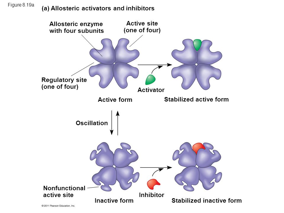 Active site (one of four)
