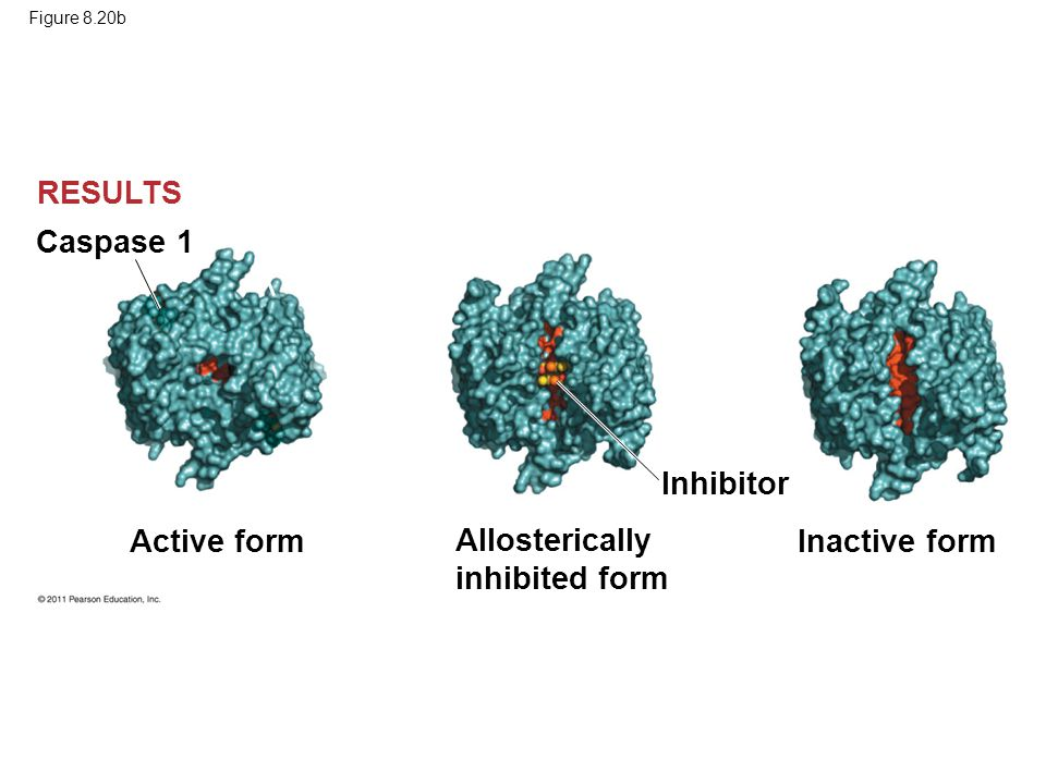 Allosterically inhibited form Inactive form