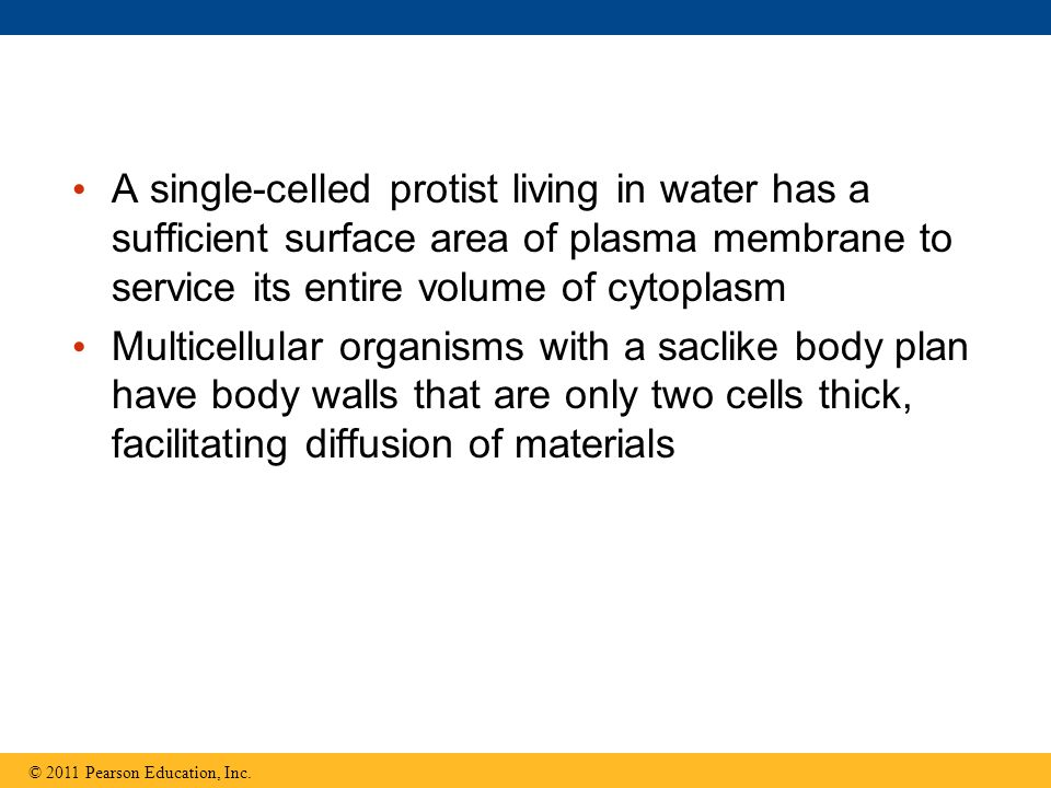 A single-celled protist living in water has a sufficient surface area of plasma membrane to service its entire volume of cytoplasm