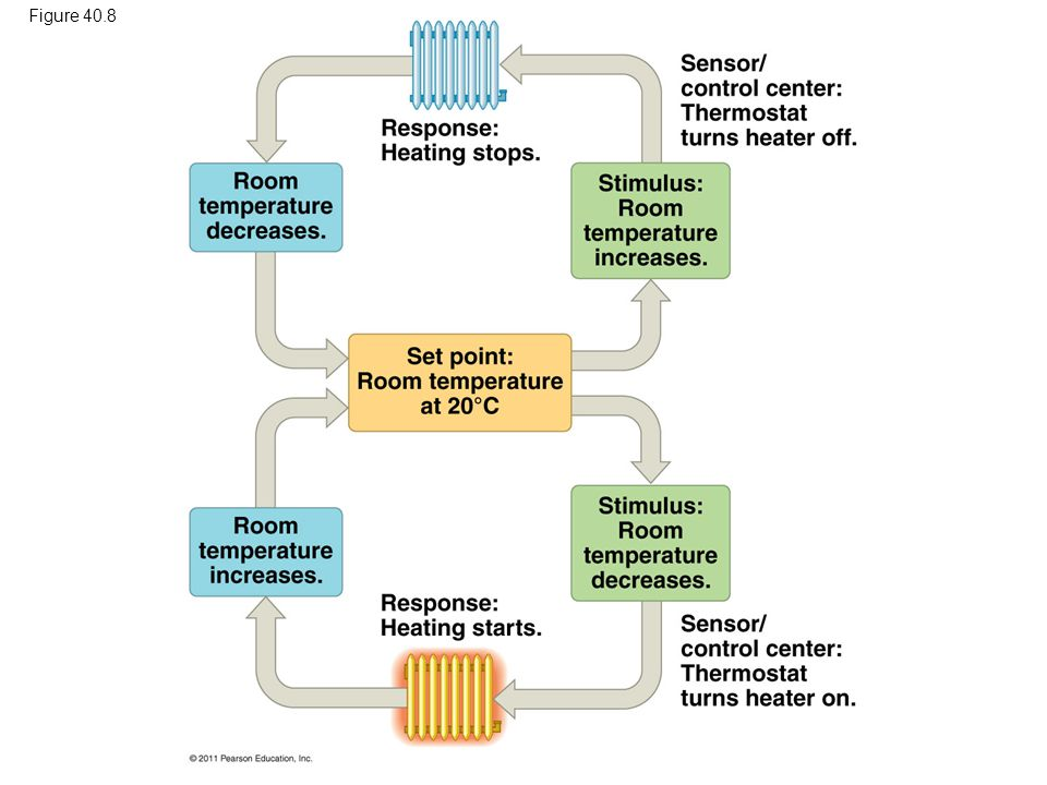 Figure 40.8 Figure 40.8 A nonliving example of temperature regulation: control of room temperature.