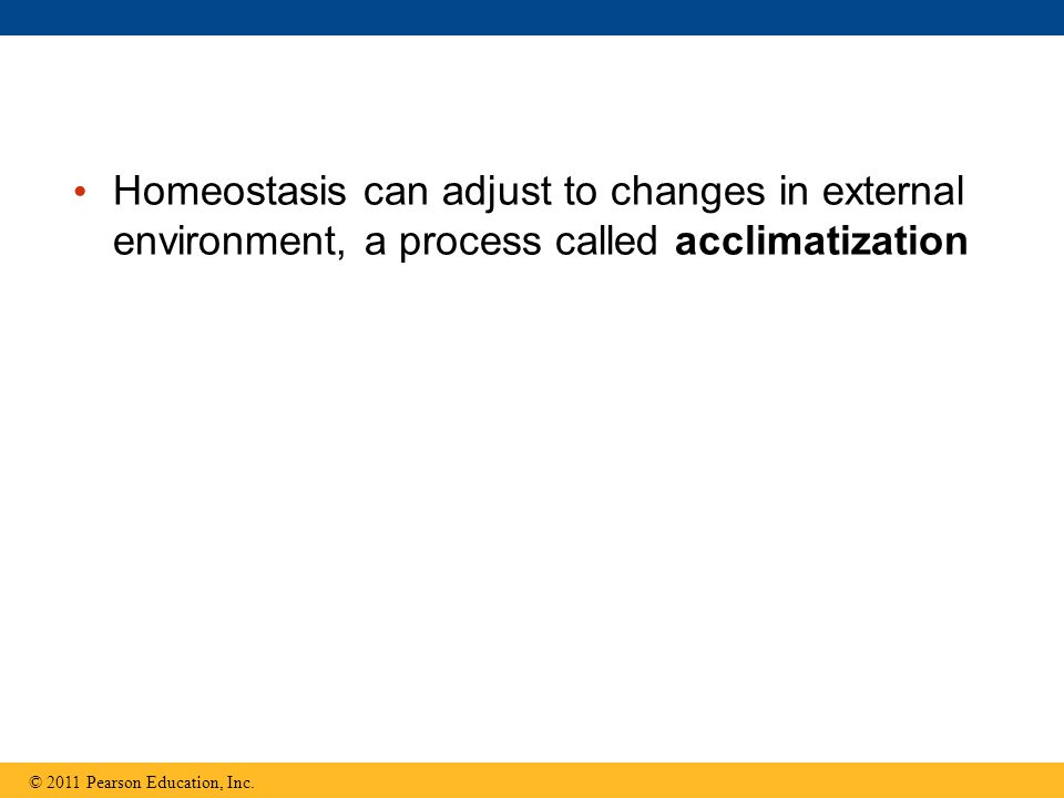 Homeostasis can adjust to changes in external environment, a process called acclimatization