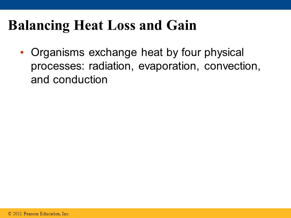 Balancing Heat Loss and Gain