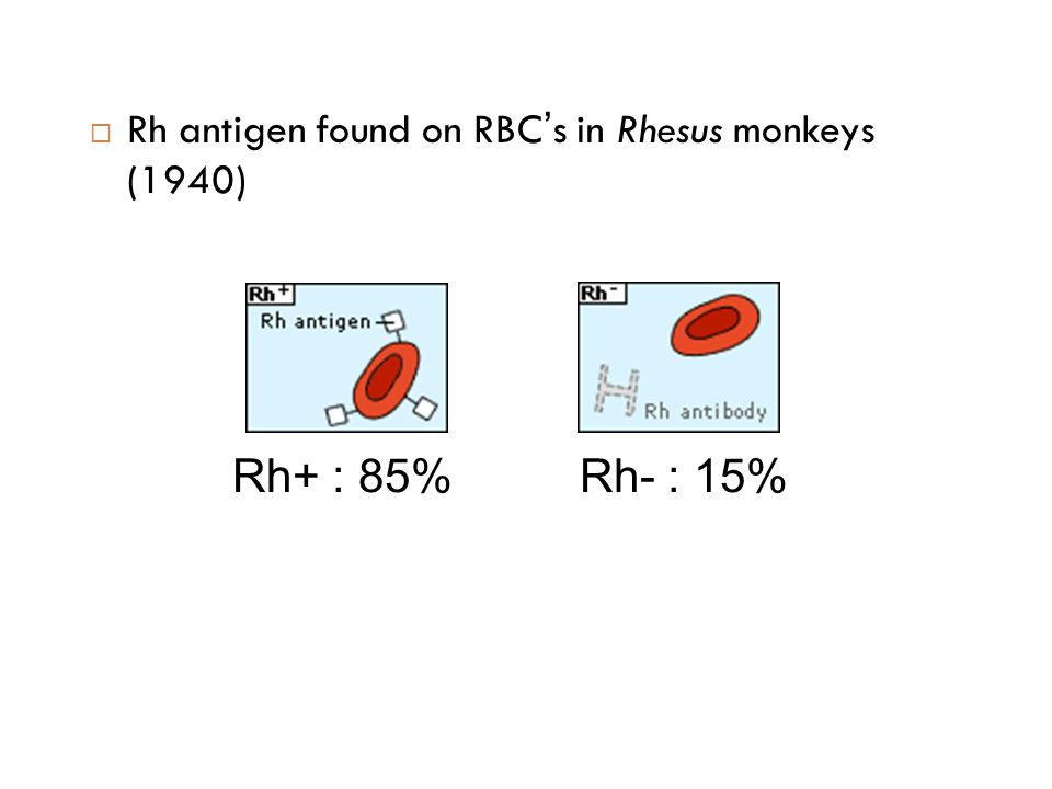 Rh antigen found on RBC's in Rhesus monkeys (1940)