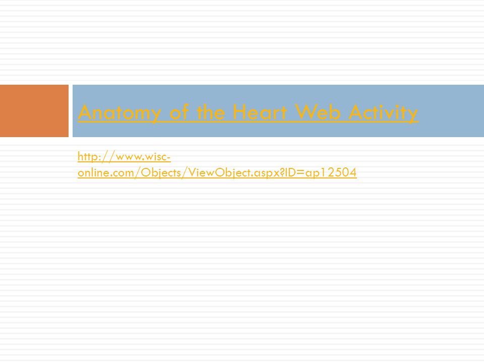 Anatomy of the Heart Web Activity