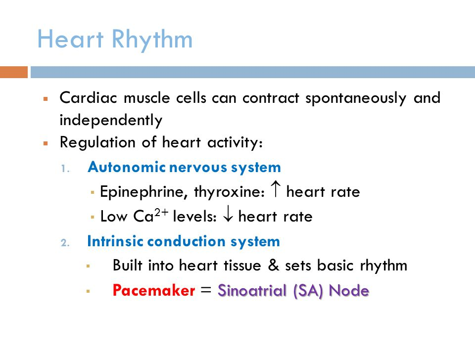 Heart Rhythm Cardiac muscle cells can contract spontaneously and independently. Regulation of heart activity: