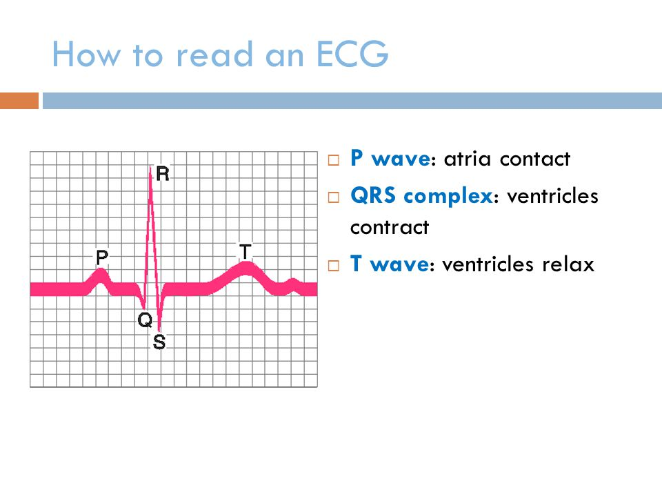 How to read an ECG P wave: atria contact