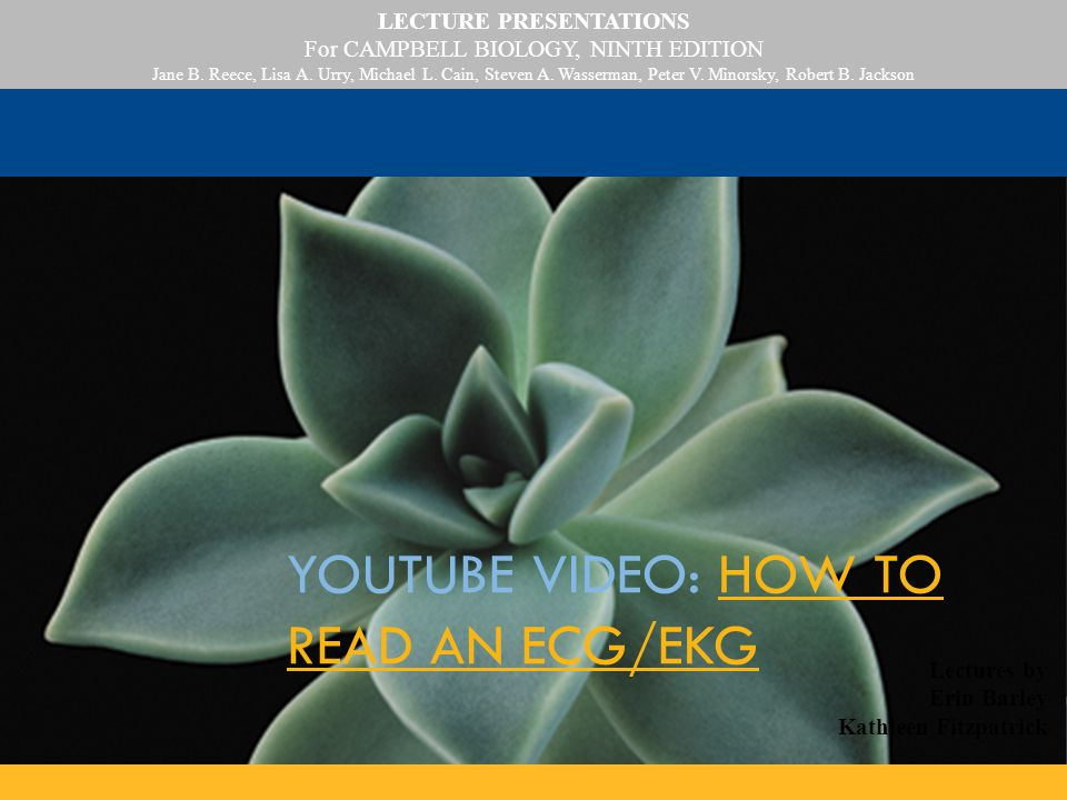 YouTube Video: How to Read an ECG/EKG