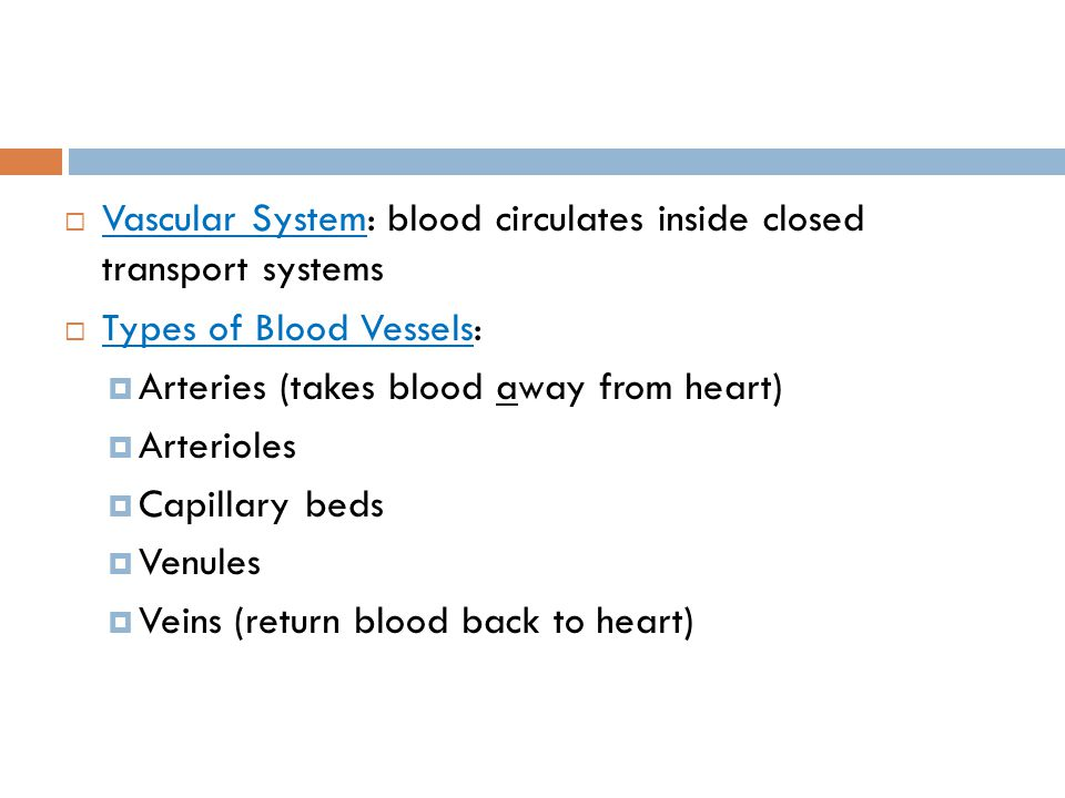 Vascular System: blood circulates inside closed transport systems