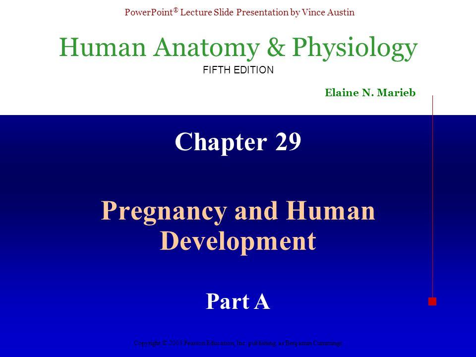 Pregnancy and Human Development