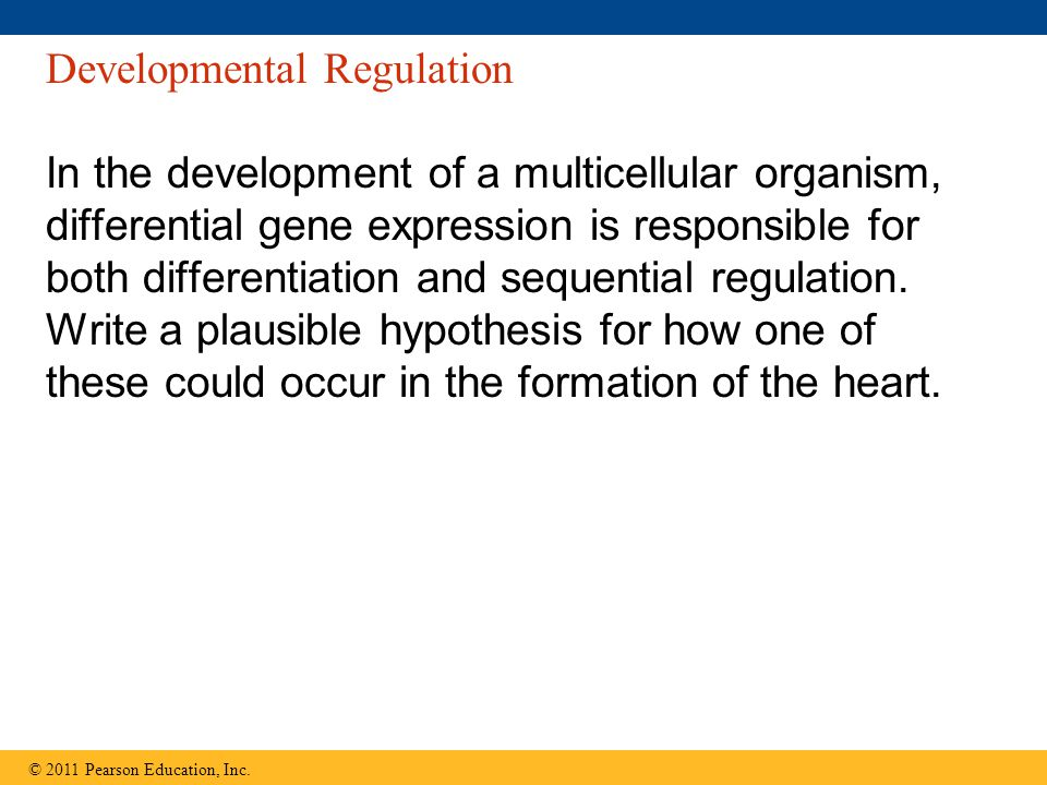 Developmental Regulation In the development of a multicellular organism, differential gene expression is responsible for both differentiation and sequential regulation.