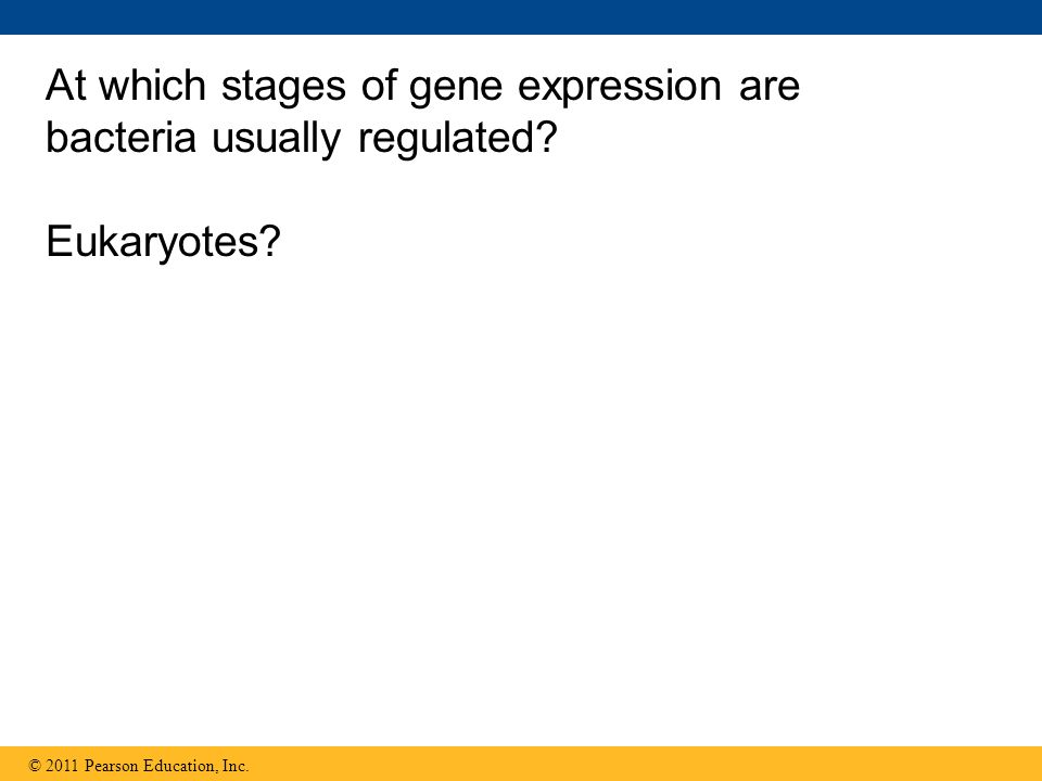 At which stages of gene expression are bacteria usually regulated