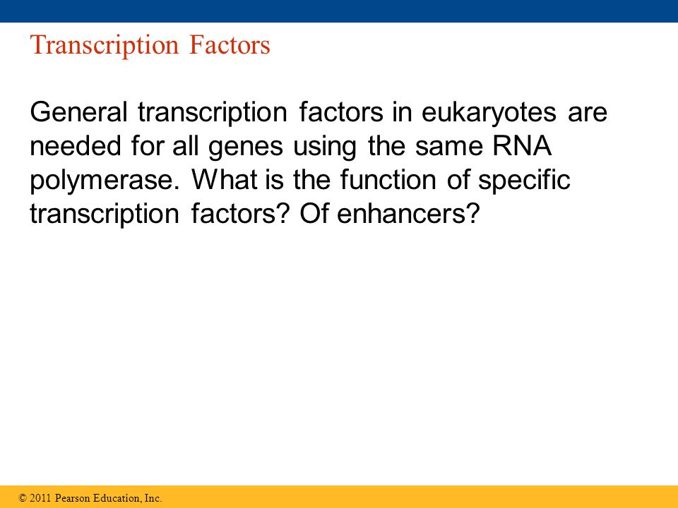 Transcription Factors General transcription factors in eukaryotes are needed for all genes using the same RNA polymerase.