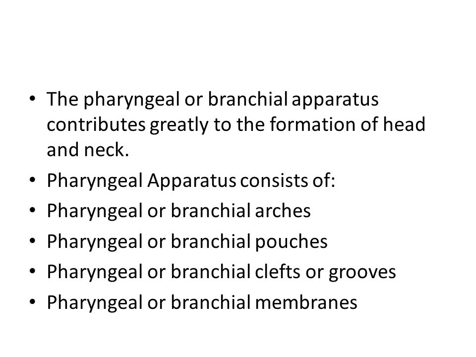 The pharyngeal or branchial apparatus contributes greatly to the formation of head and neck.