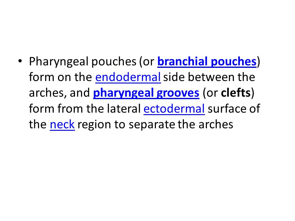 Pharyngeal pouches (or branchial pouches) form on the endodermal side between the arches, and pharyngeal grooves (or clefts) form from the lateral ectodermal surface of the neck region to separate the arches