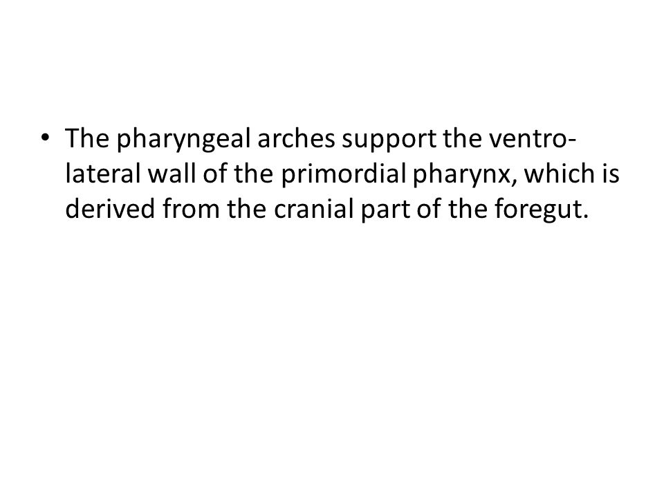 The pharyngeal arches support the ventro-lateral wall of the primordial pharynx, which is derived from the cranial part of the foregut.