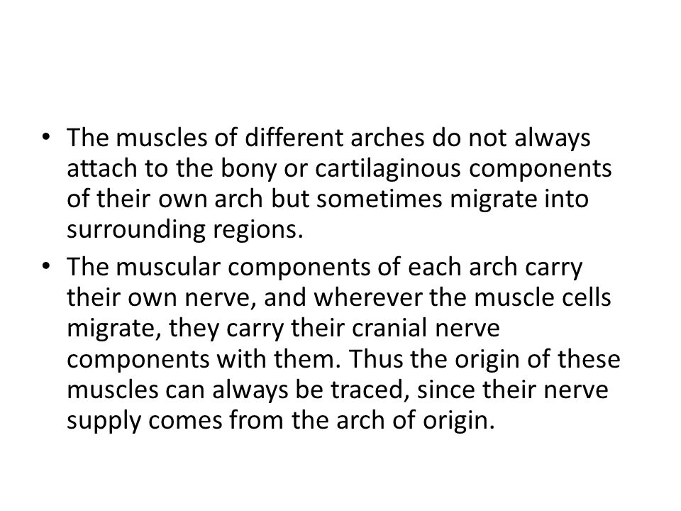 The muscles of different arches do not always attach to the bony or cartilaginous components of their own arch but sometimes migrate into surrounding regions.