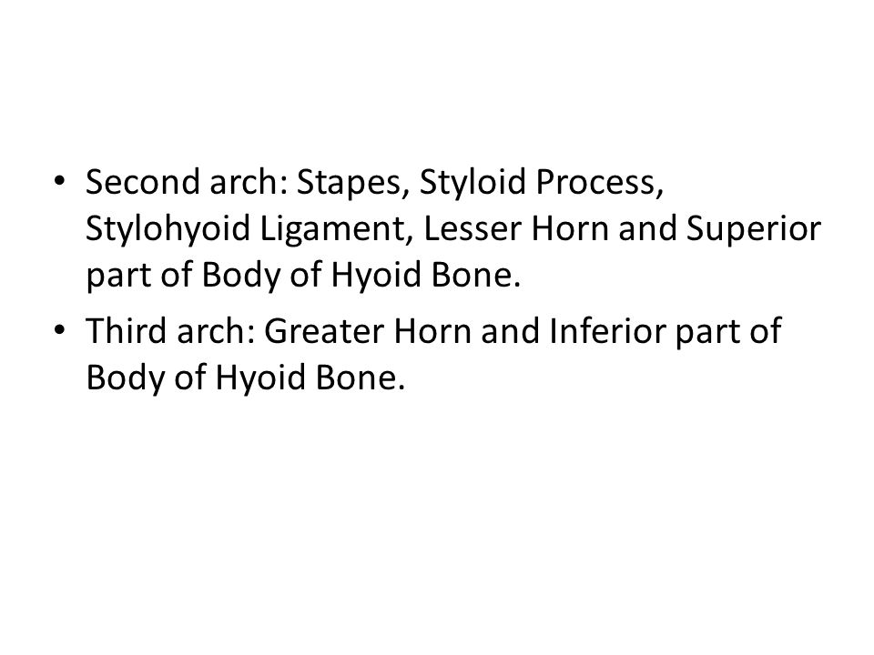 Second arch: Stapes, Styloid Process, Stylohyoid Ligament, Lesser Horn and Superior part of Body of Hyoid Bone.