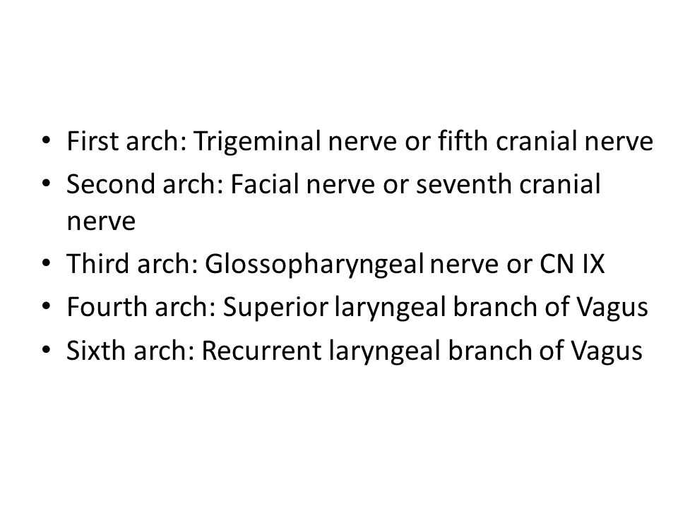 First arch: Trigeminal nerve or fifth cranial nerve