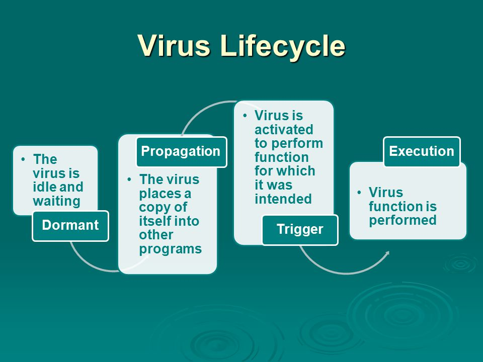 Virus Lifecycle The virus is idle and waiting Dormant