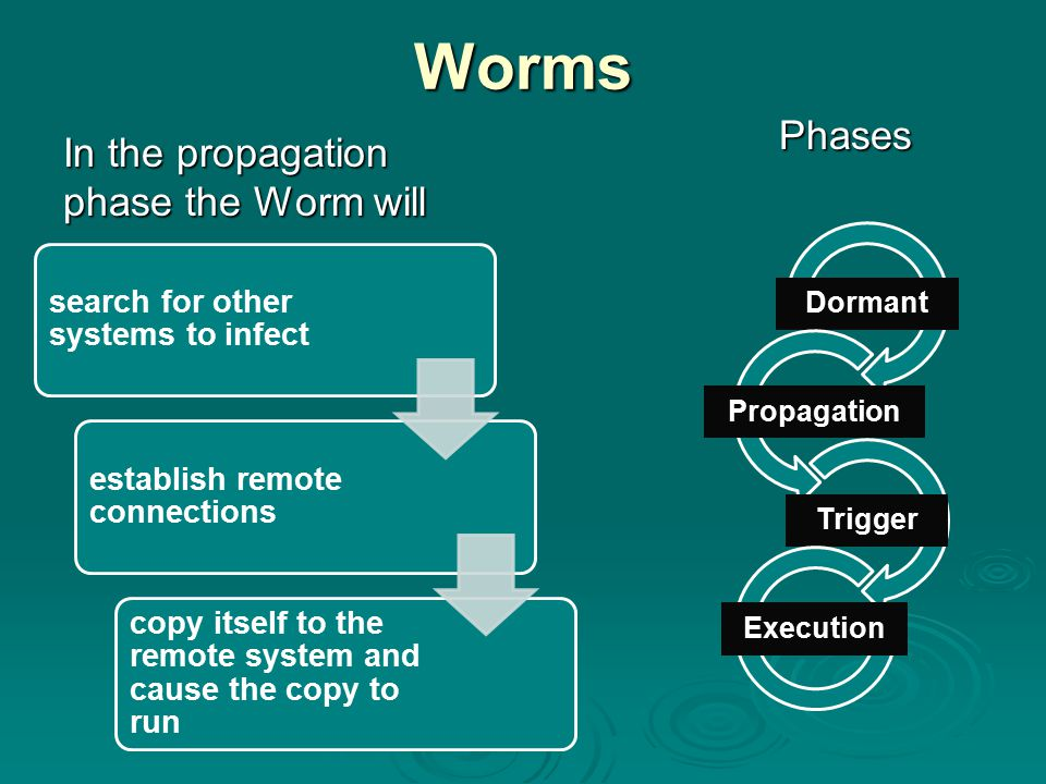 Worms Phases In the propagation phase the Worm will