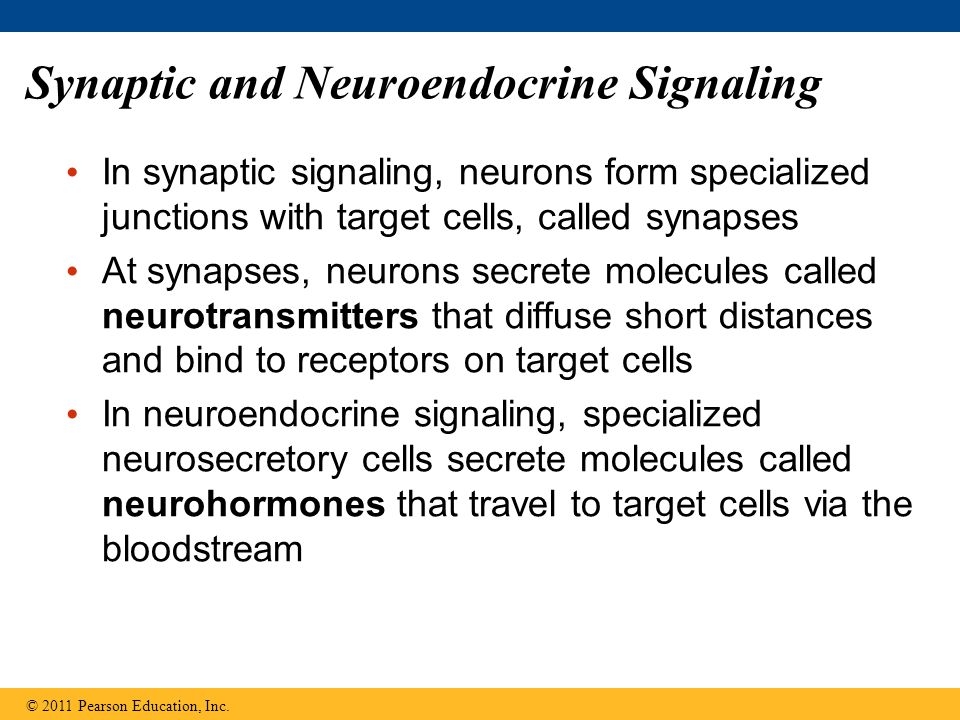 Synaptic and Neuroendocrine Signaling