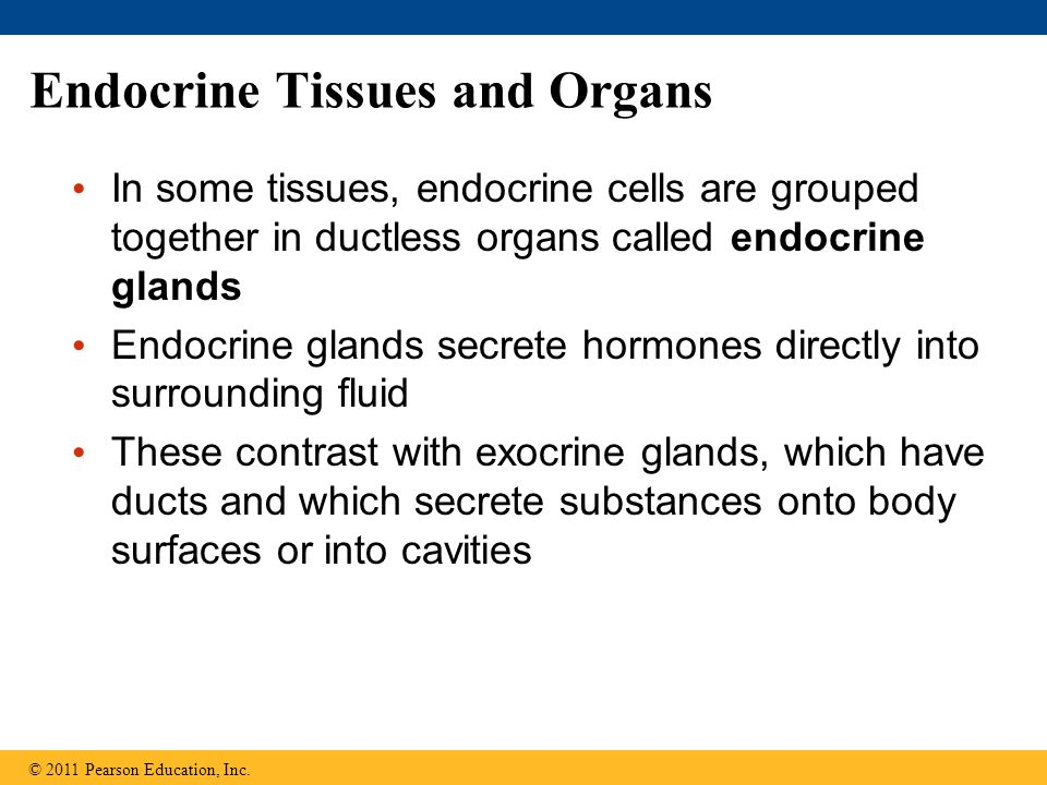 Endocrine Tissues and Organs