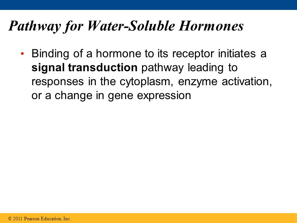 Pathway for Water-Soluble Hormones