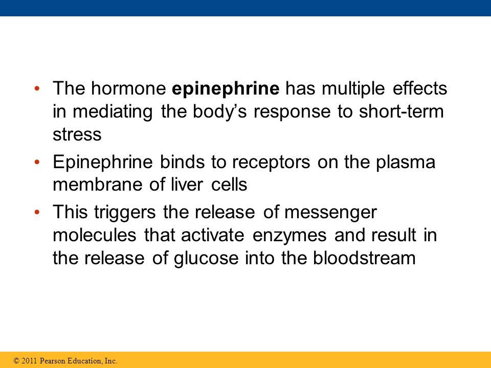 Epinephrine binds to receptors on the plasma membrane of liver cells