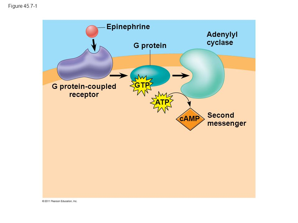 G protein-coupled receptor