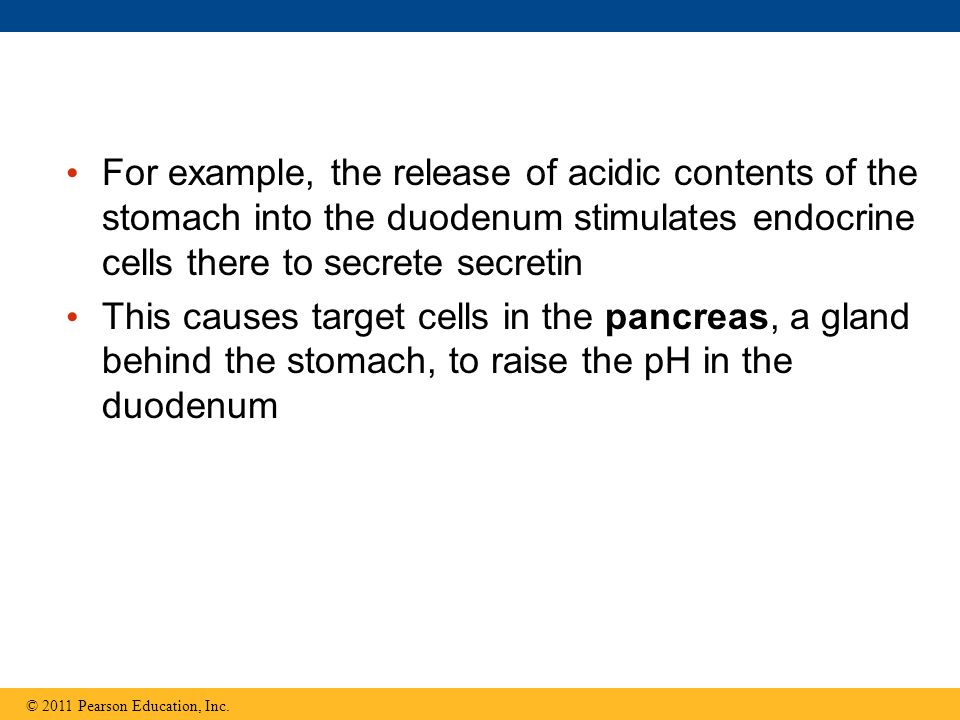 For example, the release of acidic contents of the stomach into the duodenum stimulates endocrine cells there to secrete secretin