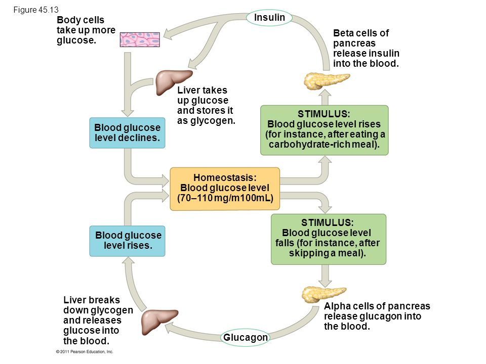 Body cells take up more glucose. Insulin