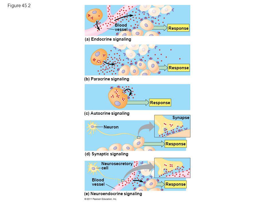 Figure 45.2 Intercellular communication by secreted molecules.