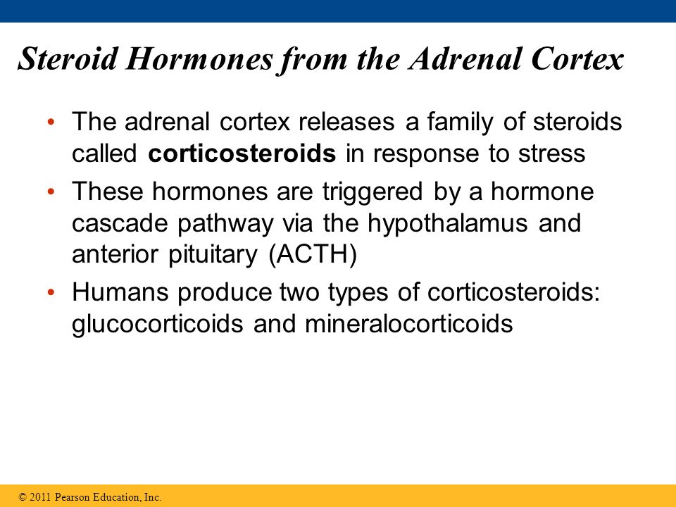 Steroid Hormones from the Adrenal Cortex
