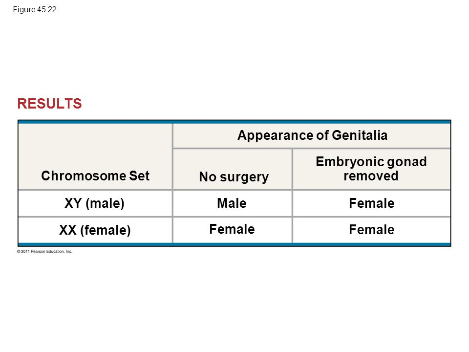 Embryonic gonad removed