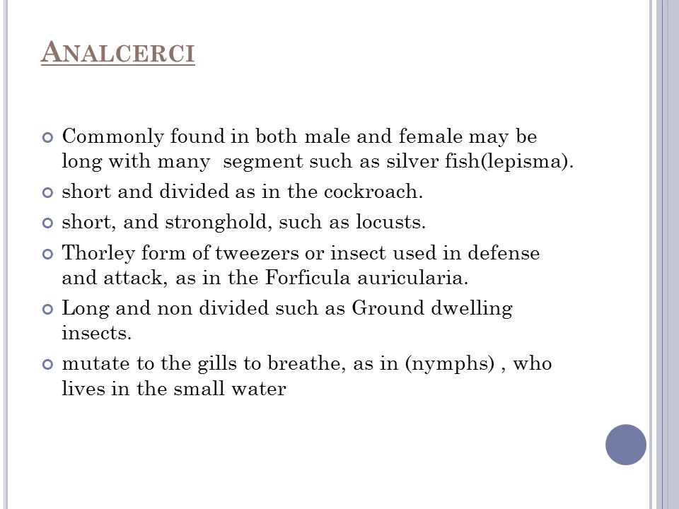 Analcerci Commonly found in both male and female may be long with many segment such as silver fish(lepisma).