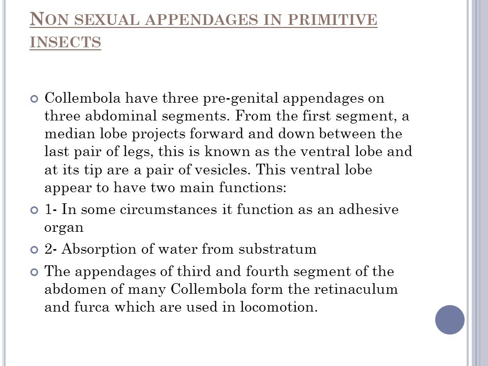 Non sexual appendages in primitive insects
